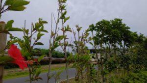 星野リゾート沖縄2
