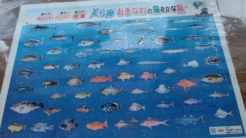 大ばんぶる舞魚
