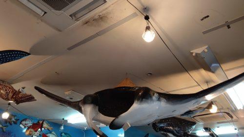 魚屋直営食堂魚まる天井