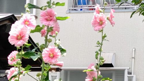 マナーハウスモトヤマ花6